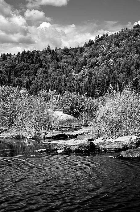 Lake and pines