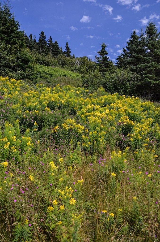 Natural flower field
